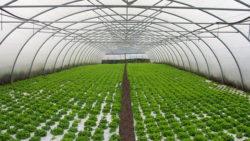 Circular 14-2018:  subvenciones para el impulso del sector empresarial agroalimentario y ganadero para promover el desarrollo económico de la provincia de Málaga