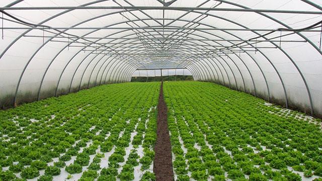 Circular 12-2018:  Subvenciones para el apoyo a las inversiones en explotaciones agrícolas (invernaderos)